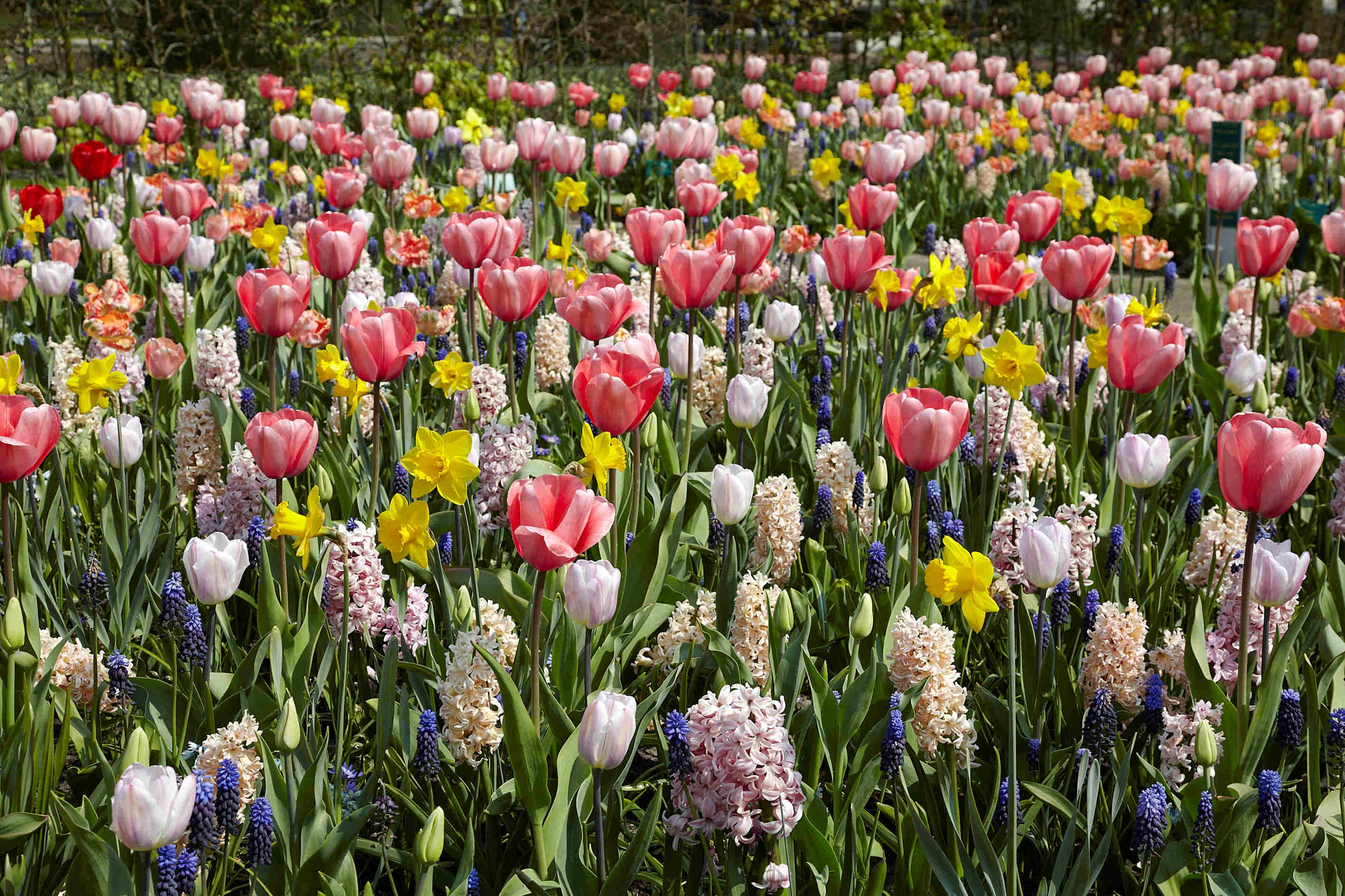 Want Gorgeous Spring Flowers Plant Fall Bulbs Now The